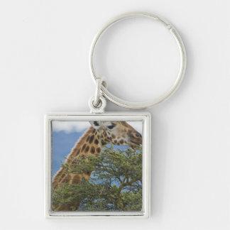 Africa. Kenya. Rothschild's Giraffe at Lake Keychain