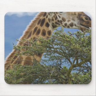 Africa. Kenya. Rothschild's Giraffe at Lake Mouse Pad