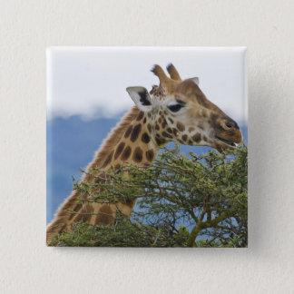 Africa. Kenya. Rothschild's Giraffe at Lake Pinback Button