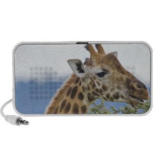 Africa. Kenya. Rothschild's Giraffe at Lake Laptop Speaker
