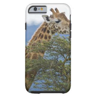 Africa. Kenya. Rothschild's Giraffe at Lake Tough iPhone 6 Case
