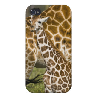 Africa. Kenya. Rothschild's Giraffe baby with Covers For iPhone 4