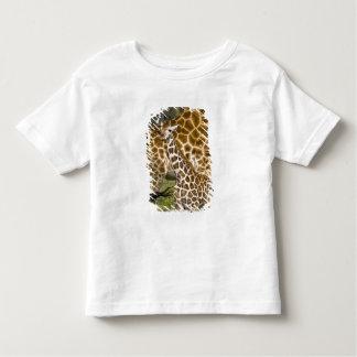 Africa. Kenya. Rothschild's Giraffe baby with Toddler T-shirt