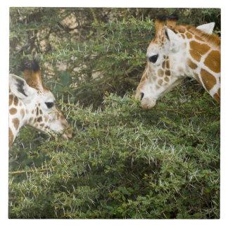 Africa. Kenya. Rothschild's Giraffes at Lake Ceramic Tile