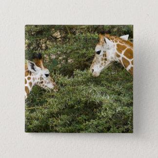 Africa. Kenya. Rothschild's Giraffes at Lake Pinback Button