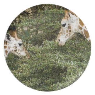 Africa. Kenya. Rothschild's Giraffes at Lake Plates