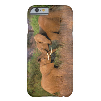 Africa, Kenya, Samburu. Elephant challenge Barely There iPhone 6 Case