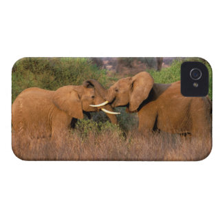 Africa, Kenya, Samburu. Elephant challenge iPhone 4 Case-Mate Case