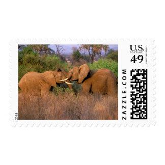 Africa, Kenya, Samburu. Elephant challenge Postage Stamp