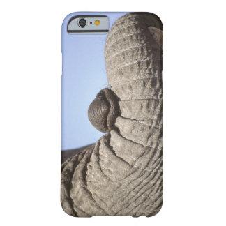 Africa, Kenya, Samburu. Elephant trunk Barely There iPhone 6 Case