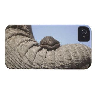 Africa, Kenya, Samburu. Elephant trunk iPhone 4 Covers