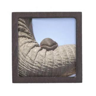 Africa, Kenya, Samburu. Elephant trunk Gift Box