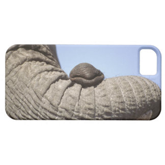 Africa, Kenya, Samburu. Elephant trunk iPhone SE/5/5s Case