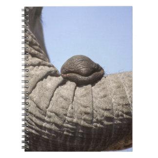 Africa, Kenya, Samburu. Elephant trunk Notebook