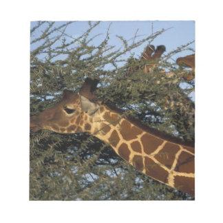 Africa, Kenya, Samburu National Reserve, 2 Notepad