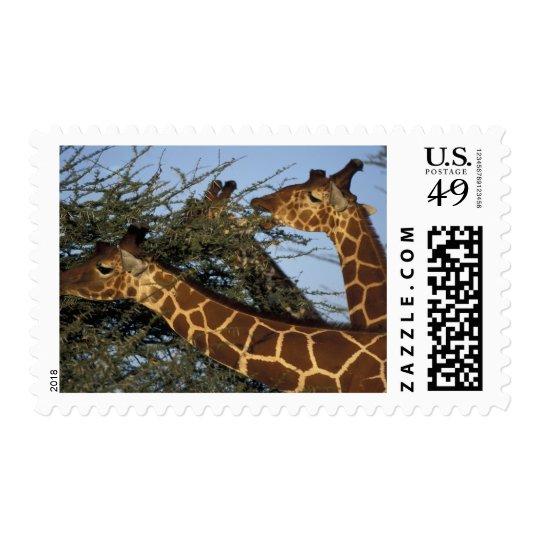 Africa, Kenya, Samburu National Reserve, 2 Postage