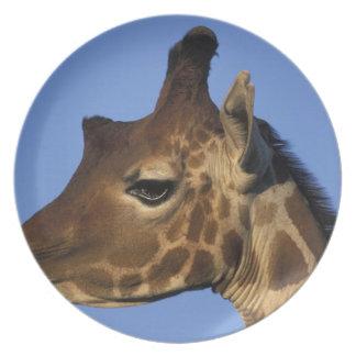Africa, Kenya, Samburu National Reserve, Plate