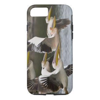 Africa. Kenya. White Pelicans in flight at Lake iPhone 8/7 Case