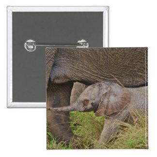 Africa, Kenya wildlife, baby elephant. Pin