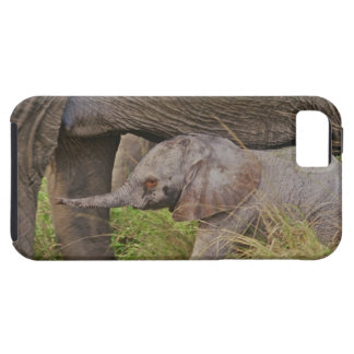 Africa, Kenya wildlife, baby elephant. iPhone SE/5/5s Case