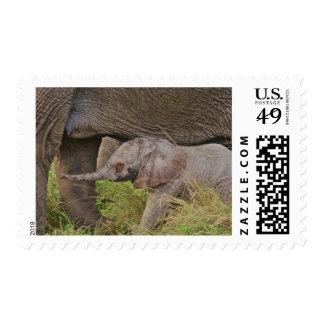 Africa, Kenya wildlife, baby elephant. Stamps