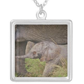 Africa, Kenya wildlife, baby elephant. Square Pendant Necklace