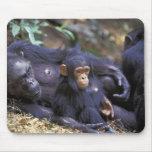 África, la África del Este, Tanzania, hembra de Go Alfombrilla De Raton