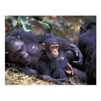 África, la África del Este, Tanzania, hembra de Postales