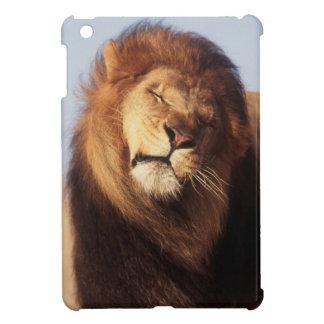 África, león africano masculino (Panthera Leo)