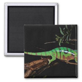 Africa, Madagascar, Ankarana Special Reserve. 2 Inch Square Magnet