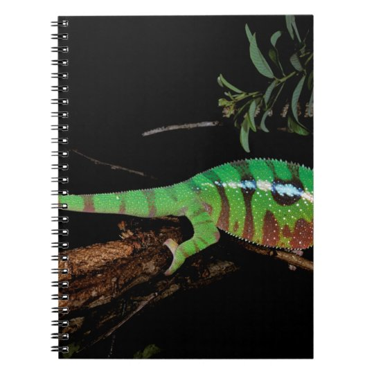 Africa, Madagascar, Ankarana Special Reserve. Notebook