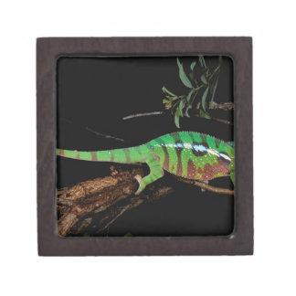 Africa, Madagascar, Ankarana Special Reserve. Premium Trinket Boxes