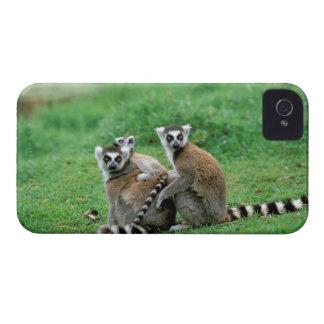 Africa Madagascar Antananarivo Tsimbazaza Blackberry Bold Covers