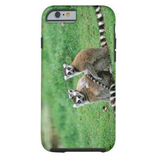 Africa, Madagascar, Antananarivo, Tsimbazaza Tough iPhone 6 Case
