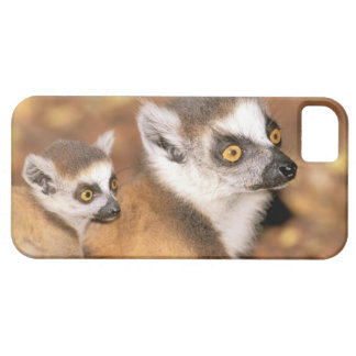 Africa Madagascar Berenty Private Reserve iPhone 5 Cover