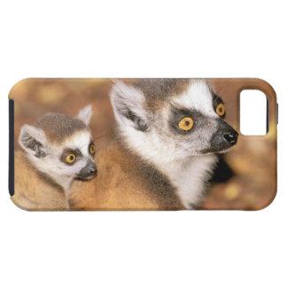 Africa, Madagascar, Berenty Private Reserve. iPhone SE/5/5s Case