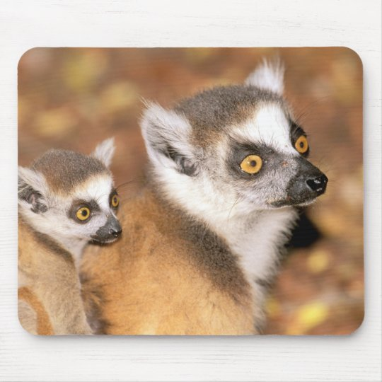 Africa, Madagascar, Berenty Private Reserve. Mouse Pad
