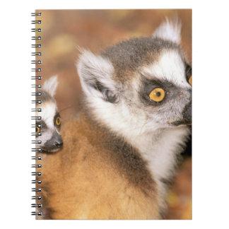 Africa, Madagascar, Berenty Private Reserve. Notebook