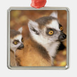 Africa, Madagascar, Berenty Private Reserve. Square Metal Christmas Ornament