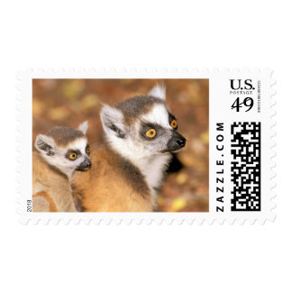 Africa, Madagascar, Berenty Private Reserve. Postage