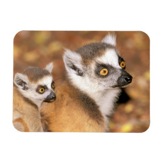 Africa, Madagascar, Berenty Private Reserve. Rectangular Photo Magnet