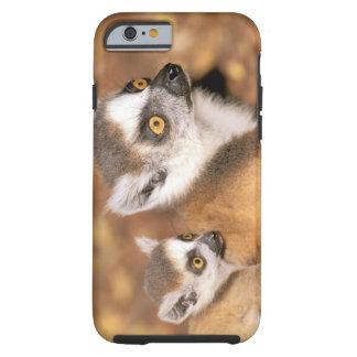Africa, Madagascar, Berenty Private Reserve. Tough iPhone 6 Case