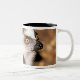 Africa, Madagascar, Berenty Private Reserve. Two-Tone Coffee Mug