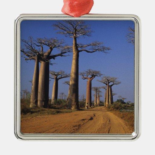 Africa, Madagascar, Morondava, Baobab Avenue. Christmas Tree Ornament