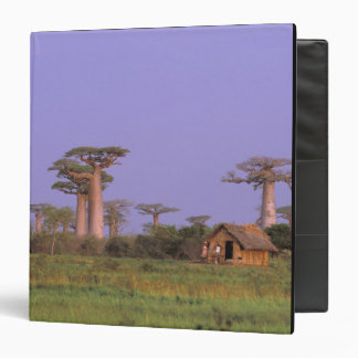 Africa, Madagascar, Morondava. Baobabs Vinyl Binders