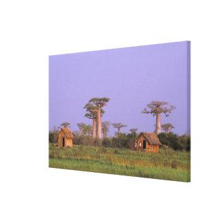 Africa, Madagascar, Morondava. Baobabs Canvas Print