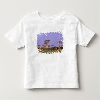Africa, Madagascar, Morondava. Baobabs T-shirt
