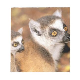 África, Madagascar, reserva privada de Berenty Bloc De Notas