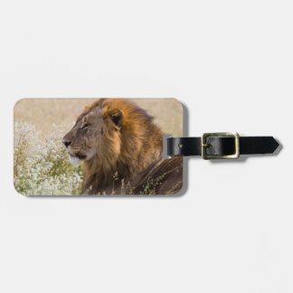 Africa, Namibia, Etosha National Park 2 Bag Tag
