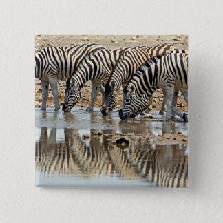Africa, Namibia, Etosha NP. Burchell's Zebra Button
